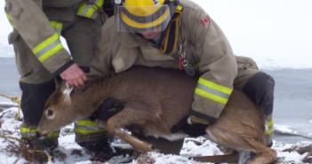 deer-rescue-5
