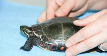 turtle-rescue-2