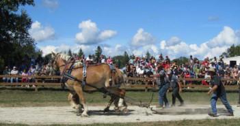 PB-Fair-horse-pull-1