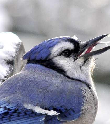 birdcount