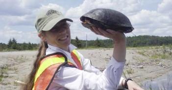 Laurentian University herpetologist  Jacqueline Litzguz with a healthy Blanding's turtle in Sudbury.