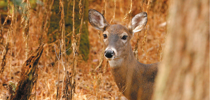 Hunting week charges see spike from 2013 numbers