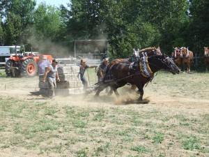 HW-Horsepull