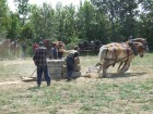 HW-horse-pull