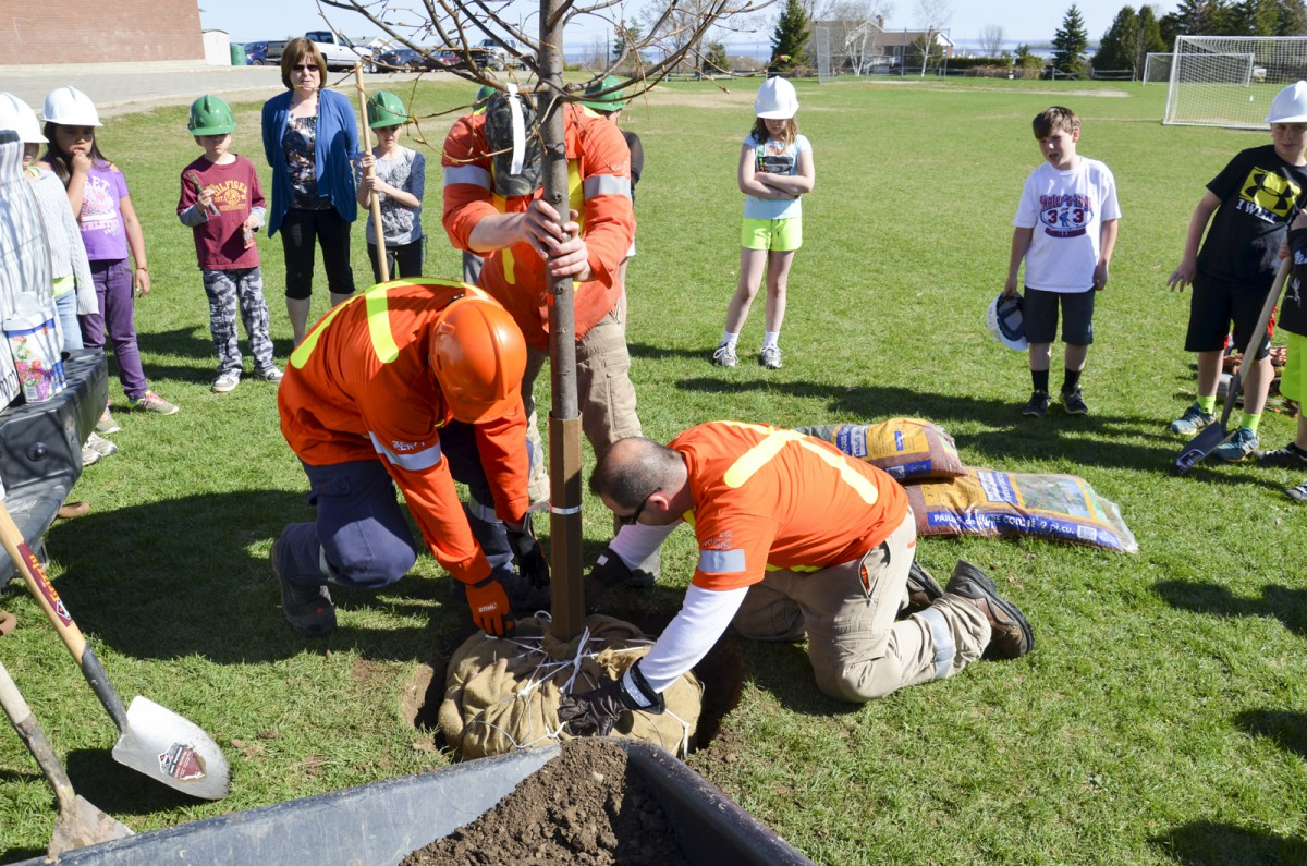 Forestry tech Steven Dey waters the tree planted by Hydro One with the help of Assiginack Grade 4 students