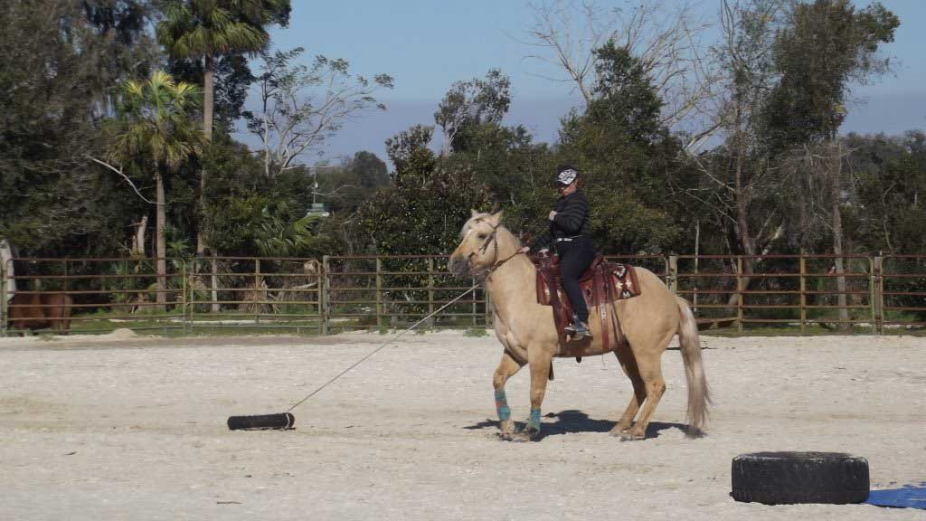 Horseperson Kyla Jansen goes through the obstacle course during her training in Florida.