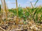 soil-crop-survey-8